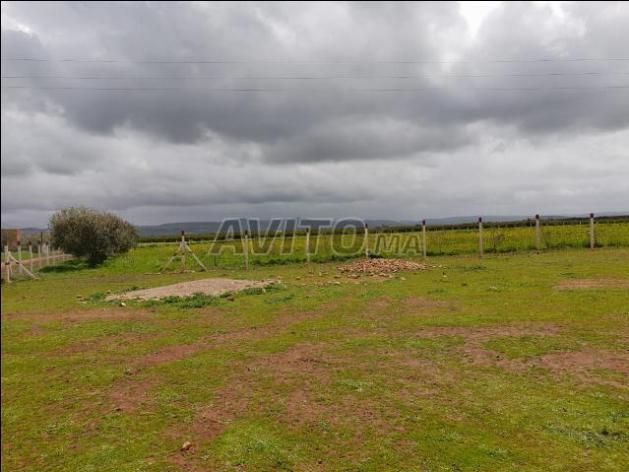 Terrain de 1 hectare et 200m à Meknès