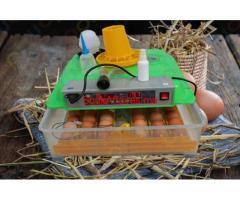 Couveuse automatique 48 oeufs Economique et facile d'utilisation