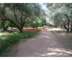 Ferme à vendre km 9 route de Fes Marrakech